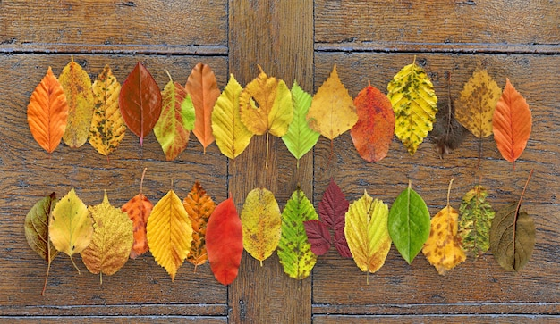Het bladachtergrond van de herfst dicht omhoog