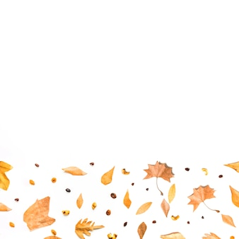 Het bodemkader van de herfst van bladeren en zaden