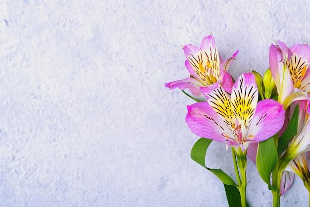 Het boeket orchideeën is mooi, fris, helder lila op een lichte achtergrond.