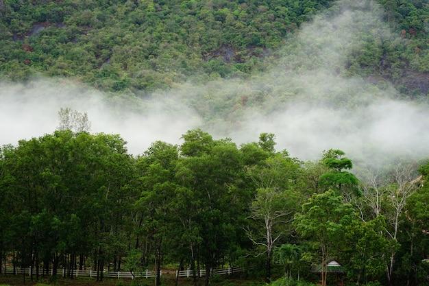 Het bos in de mist