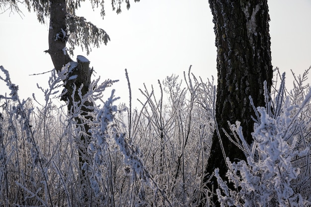 Het bos is in de winter bedekt met sneeuw, na de laatste sneeuwstormen en sneeuwval een prachtig landschap