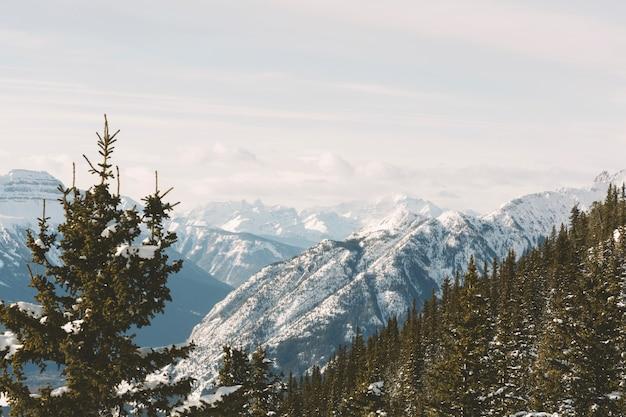 Het bos van de pijnboomboom in bergen