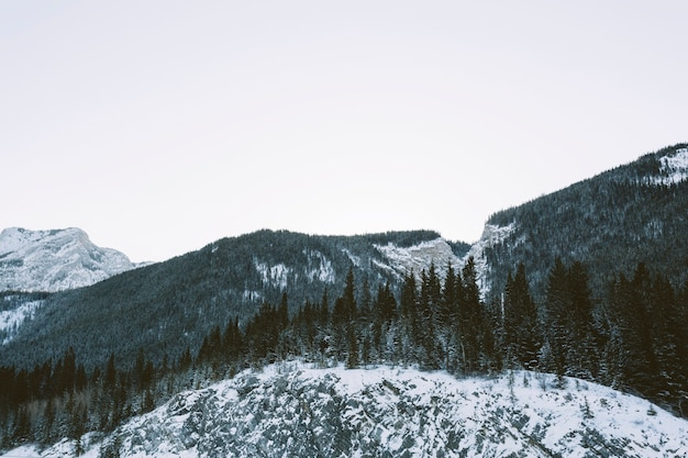 Het bos van de pijnboomboom op bergen