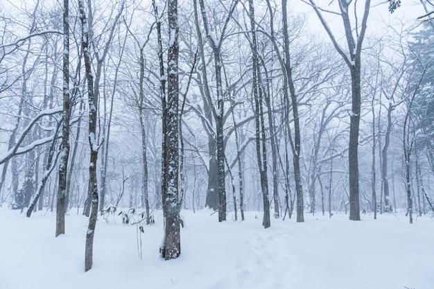 Het bos van de winter met sneeuw op bomen en weg, exemplaarruimte voor tekst.