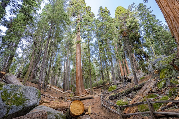 Het bosje in het park uitdunnen