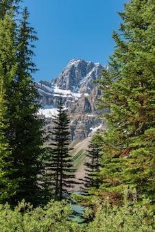 Het boslandschap van canada met grote berg op de achtergrond