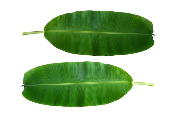 Het bovenaanzicht van de bananenbladeren plant boom op wit