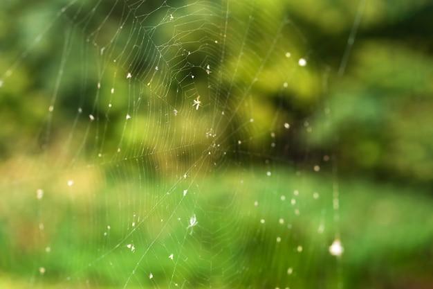 Het close-up van de spinnewebval op a van groen bos
