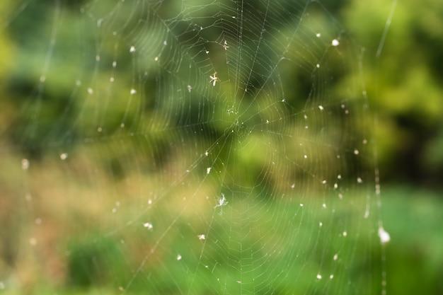 Het close-up van de spinnewebval op een achtergrond van groen bos.