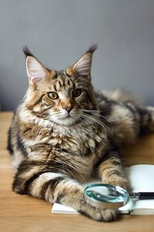 Het close-upportret van maine coon-kat ligt op een houten lijst aangaande een open notitieboekje en een vergrootglas