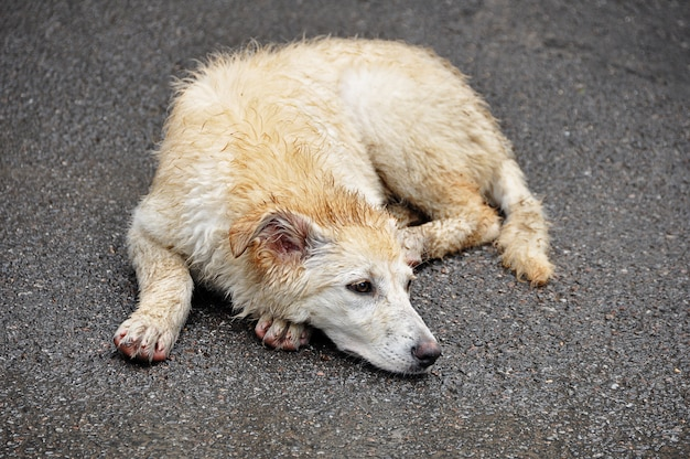 Het concept dakloze dieren