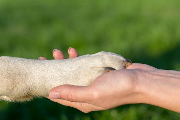 Het concept van dierenliefde voor mensen