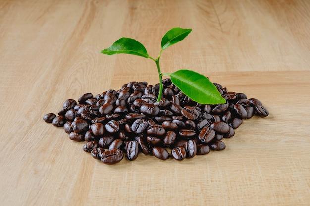 Het concept van koffieplantage