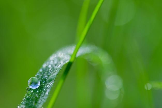 Het concept van liefde voor de wereld groene omgeving waterdruppels op de bladeren wazig bokeh achtergrond