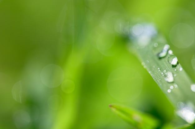 Het concept van liefde voor de wereld groene omgeving