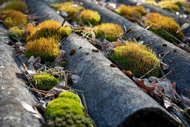 Het dak op het oude dak is bedekt met mos.