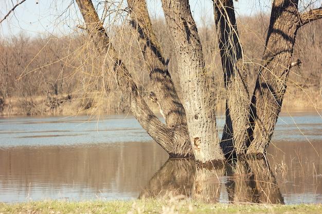 Het de lentelandschap met berkbomen en smelt water op het meer of de rivier.