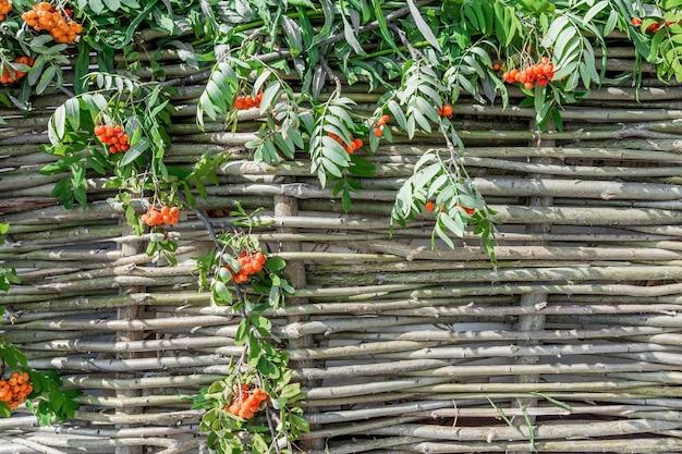 Het decoratieve hek geweven van wilgentakken is versierd met trossen lijsterbes