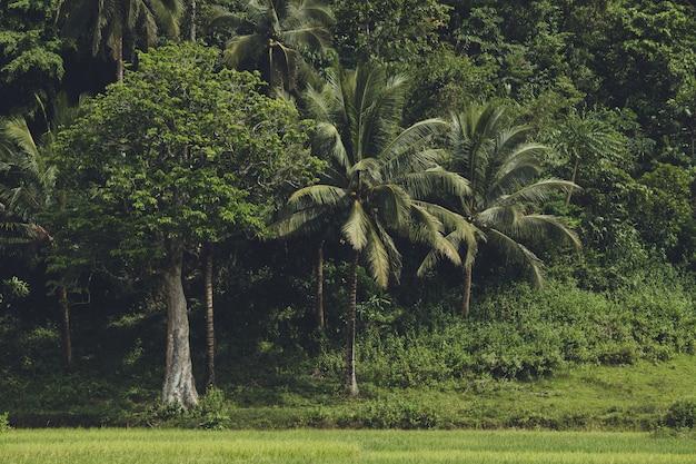 Het dichte groen van het tropische aziatische bos.