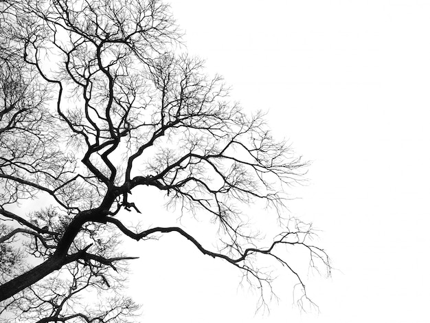 Het dode geïsoleerde silhouet van de takkenboom