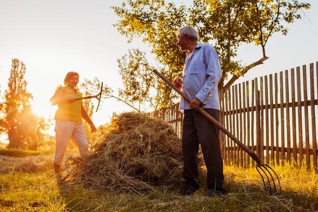 Het familiepaar van landbouwers verzamelt hooi met hooivork bij zonsondergang in platteland.