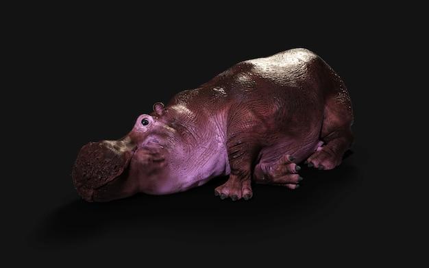 Het gemeenschappelijke nijlpaard (hippopotamus amphibius) poseren isoleren op donkere achtergrond met uitknippad.