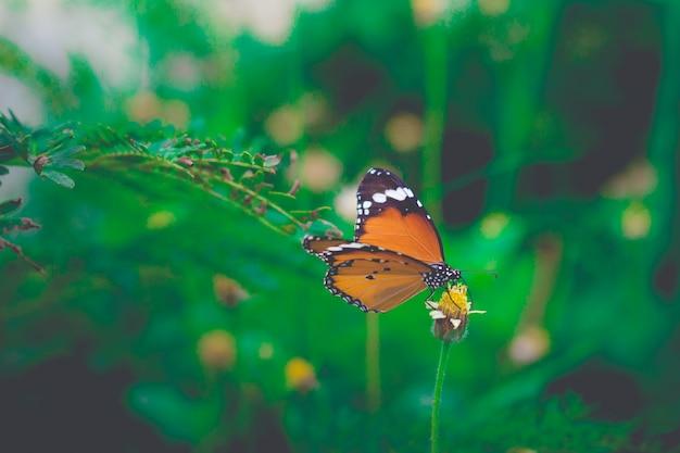Het gesloten omhoog vlinder voeden op bloemgras