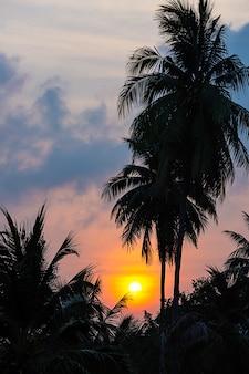 Het gouden licht van de zon en wolken in de lucht achter de kokospalmen.