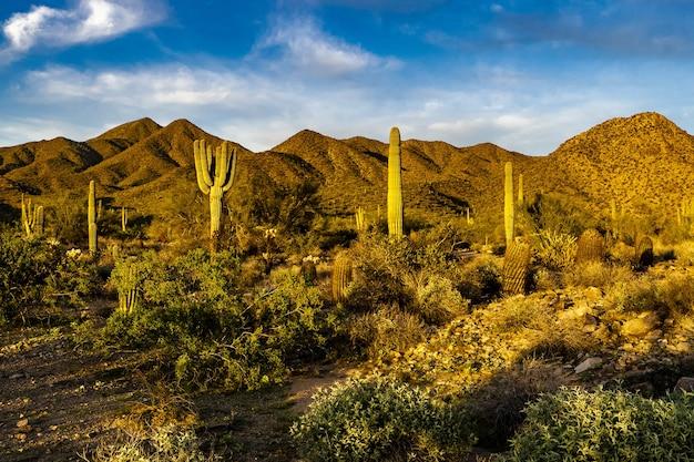 'het gouden uur in de sonorawoestijn van arizona'