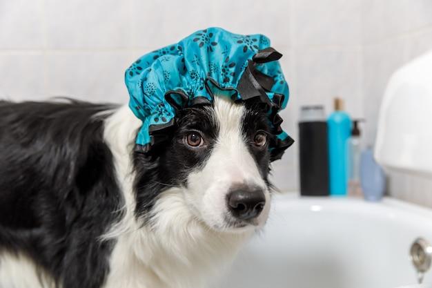 Het grappige binnenportret van de zitting van de puppyhond border collie in bad krijgt schuimbad die douchemuts draagt