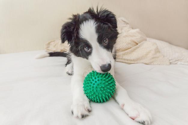 Het grappige portret van leuk border collie van de puppyhond lag op hoofdkussendeken in bed en het spelen met groene stuk speelgoed bal