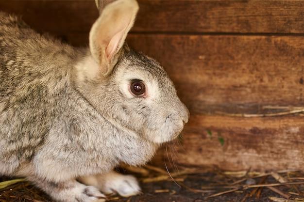 Het grijze en bruine konijn in een kooi, sluit omhoog
