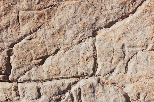Het grijze oppervlak van de stenen rots met diepe scheuren en witte schelpen van zee-eikels