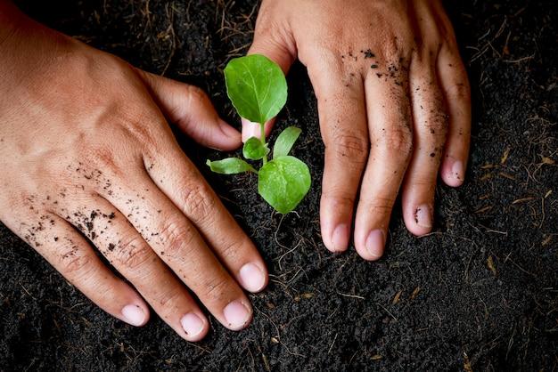 Het groeiconcept, handen plant de zaailingen in de grond