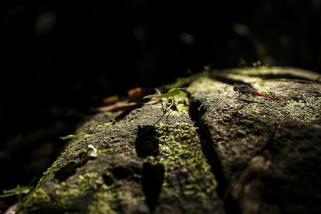 Het groene blad groeien op de manier aan waterval, de tropische bosinstallatie, altijdgroene wijnstok op zwarte achtergrond.