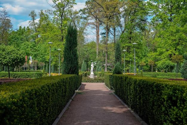 Het groene landschap van het park met struiken en thuja bomen. natuurlijke achtergrond.