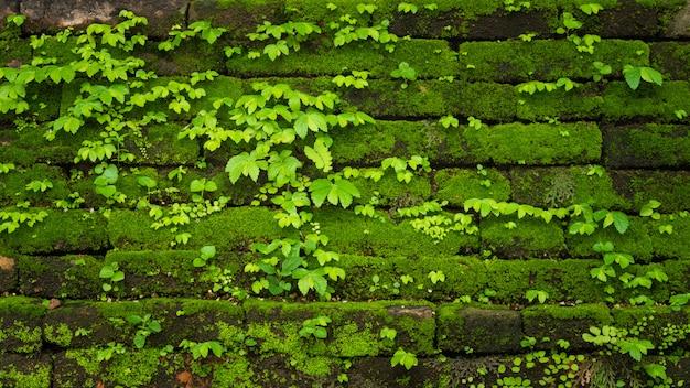 Het groene mos groeien op oude bakstenen muur