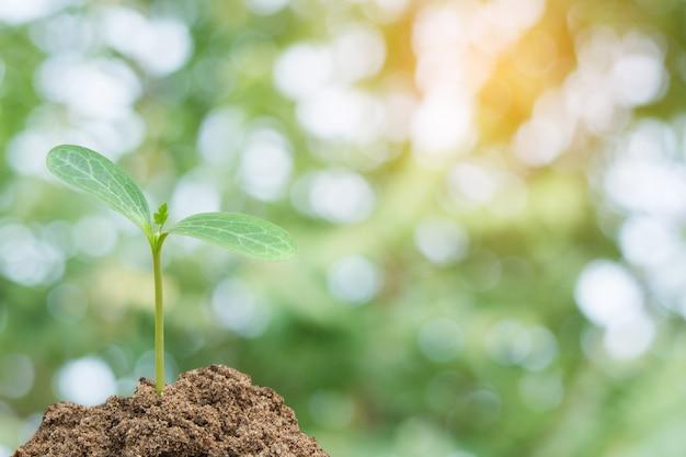 Het groene spruit groeien, jonge plant van grond met zonlicht en de groene achtergrond van de onduidelijk beeldaard