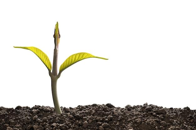 Het groene spruit voortkomen uit geïsoleerde grond