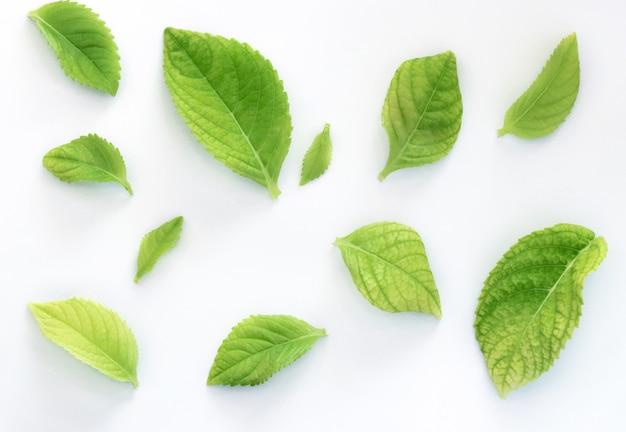 Het groene verlof isoleert patroon op witte achtergrond
