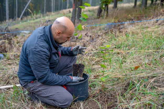 Het herstellen van een stervend bos met behulp van het planten van nieuwe bomen