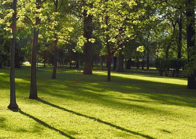 Het horizontale landschap van een park verlicht door de zon met loofbomen.