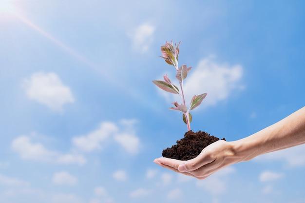 Het idee van menselijke handen helpt bomen te laten groeien.