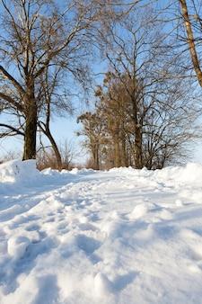 Het ijzige landschap van de winterbomen