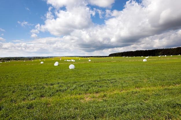 Het ingepakte gras - het gras gemaaid en verpakt in balen bedoeld voor het voederen van dieren in de winter