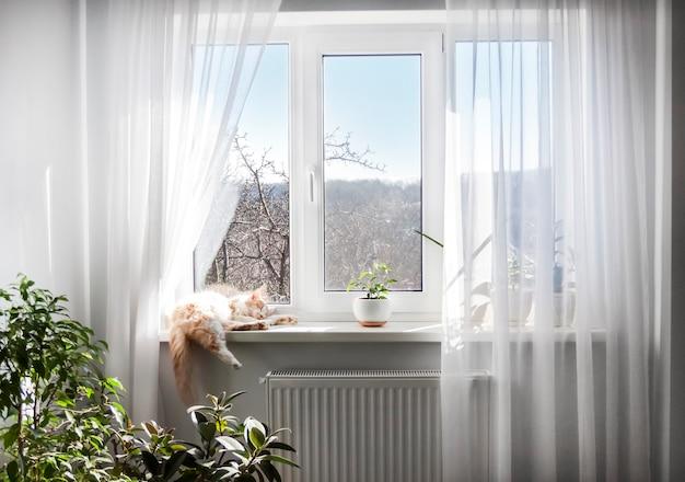 Het interieur van de woonkamer in lichte kleuren. raam met witte tule en slapende kat op vensterbank