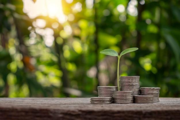 Het jonge boompje dat op een stapel munten groeit, heeft een natuurlijke wazige groene achtergrond