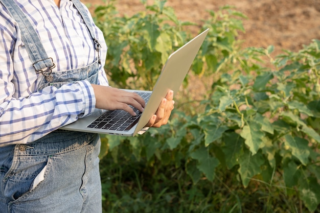 Het jonge meisje controleert de opbrengst van aubergineboerderij en gebruikt een geautomatiseerde laptop voor het controleren van kwaliteit. boer is een beroep dat geduld en toewijding vereist. een boer of tuinman zijn.