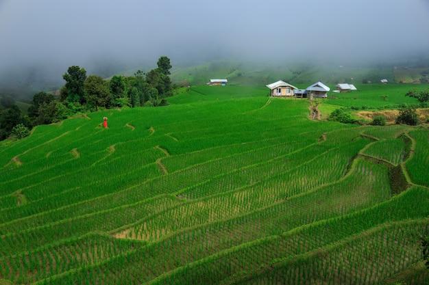 Het jonge vrouw ontspannen in groene rijstterrassen op vakantie bij pa bong paing dorp, mae-jam chiang-mai, thailand