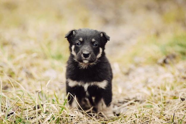 Het jonge zwarte puppy wacht op meester openlucht